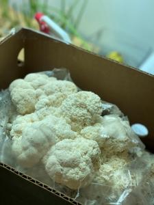 Indoor-mushroom-growing