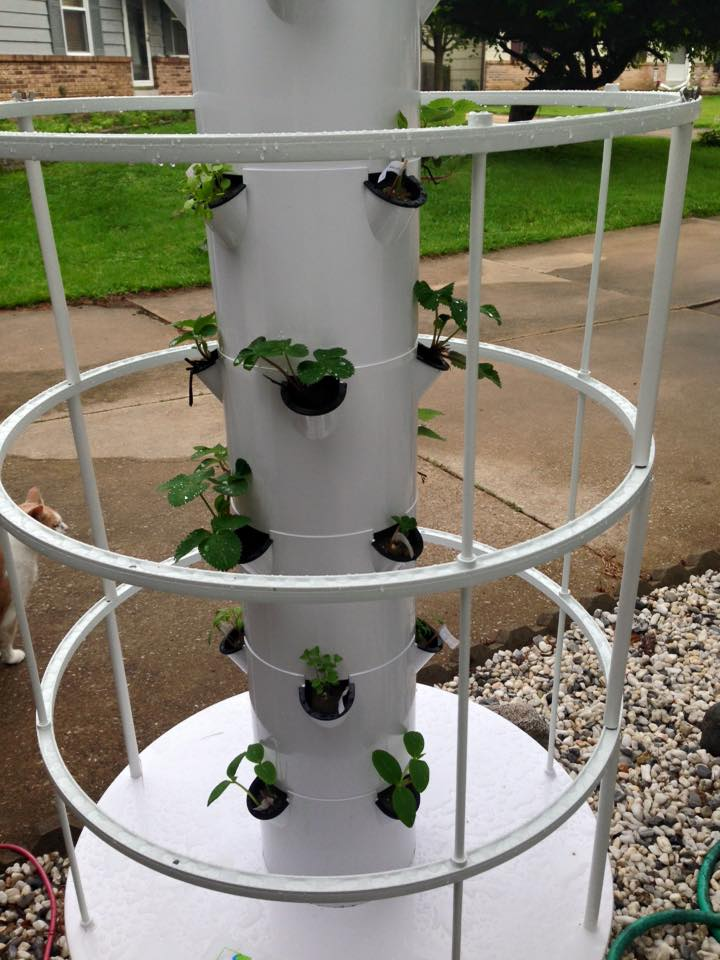 mytowergarden10days